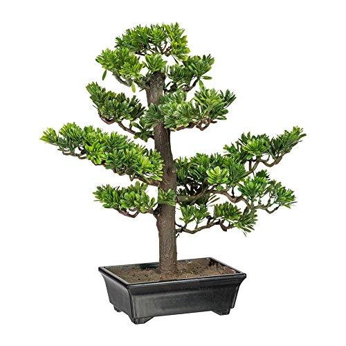 wohnfuehlidee Kunstpflanze Bonsai Podocarpus Grün, Inklusive Kunststoff-Schale, Höhe ca. 43 cm