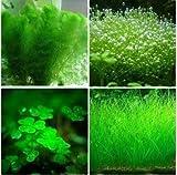 200 Samen / pack Pflanzen Aquarium Aquarium Dekoration Gras Samenpflanzen Samen