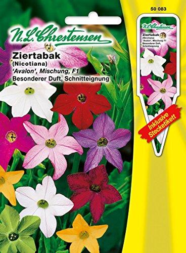 Ziertabak ' Avalon Mischung' F1 besonderer Duft, Schnitteignung ( mit Stecketikett) 'Nicotiana affinis'