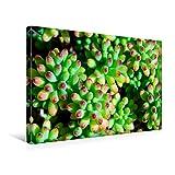 Premium Textil-Leinwand 45 x 30 cm Quer-Format Bunter Bodendecker | Wandbild, HD-Bild auf Keilrahmen, Fertigbild auf hochwertigem Vlies, Leinwanddruck von Nina Schwarze