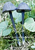 Pilze (Wandkalender 2018 DIN A4 hoch): Pilze: Vom Frühling bis in den späten Herbst findet man sie in Wäldern,Mooren und auf