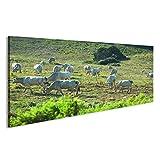 islandburner Bild Bilder auf Leinwand Genannt chianina Kuh, die auf der Wiese in Toskana weiden lässt. Wandbild, Poster, Leinwandbild HGM
