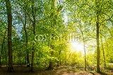 druck-shop24 Wunschmotiv: Lichtung im Wald mit Bach und Sonne #111436706 - Bild auf Alu-Dibond - 3:2-60 x 40 cm/40 x 60 cm