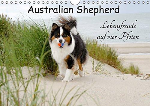 Australian Shepherd - Lebensfreude auf vier Pfoten (Wandkalender 2018 DIN A4 quer): Die Abenteuer eines powervollen Australian Shepherd ... [Kalender] [Apr 01, 2017] Nozulak, Miriam