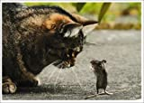 Postkarte Katze & Maus * Freunde?