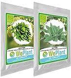 BIO Livèche & Sauge - Graines de plantes aromatiques/Intérieur & Extérieur
