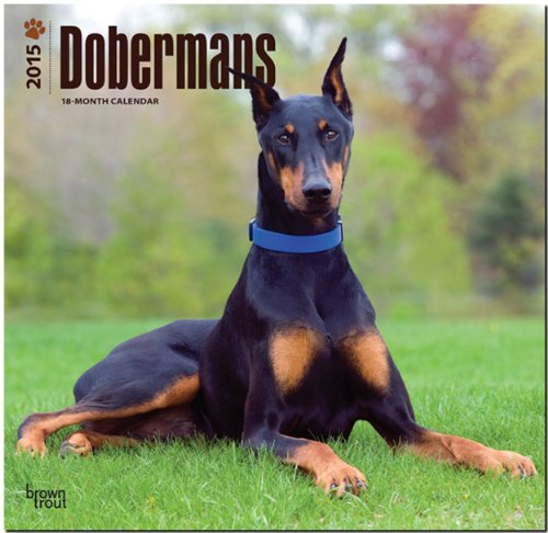 Dobermans 2015 Square 12x12 Multilingual Edition