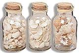 Tamia-Home Streu Potpourri Muscheln Shell Natur 3 Sorten H17cm D8,5cm (3267700 Herzmuschel)