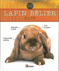 LAPIN BELIER NAIN