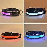 vlunt solarbetrieben Hundehalsband USB-Kabel wiederaufladbar collar-available in 4Farben & 3Größen Erhältlich: Macht ihren Hund sichtbar, Safe & gesehen -