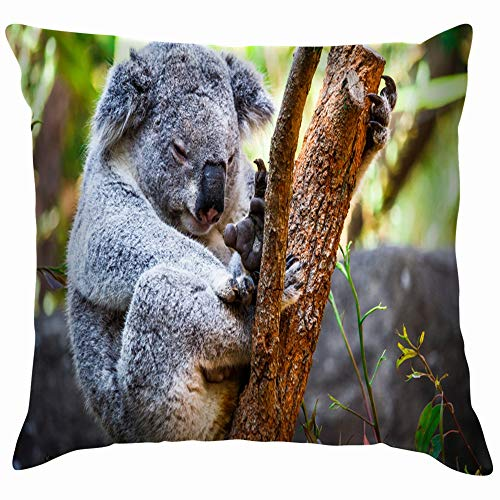 beautiful& Koala Bear Sitting On Tree Branch Animals Wildlife Melbourne Throw Pillow Case Cushion Cover Pillowcase Watercolor for Couch 18X18 Inch (Melbourne Shop Halloween)