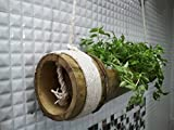 #1: Rochfern Bamboo hanging planter with cotton rope