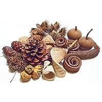 Exoten Sortiment Natur / Potpourri Maritima Zapfenmix Fruchtmix Weihnachten Advent Deko Kranz Gesteck Geschenke Baumschmuck Festdeko