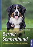 Berner Sennenhund: Auswahl, Haltung, Erziehung, Beschäftigung