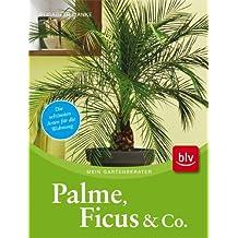Palme, Ficus und Co.: Die schönsten Arten für die Wohnung