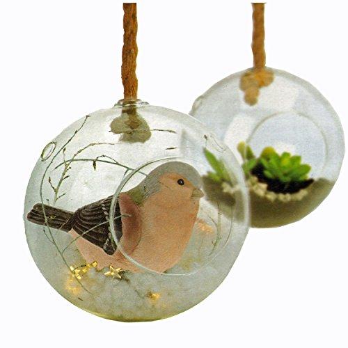 g nstig xxl glaskugel vase zum aufh ngen und dekorieren mit pflanzen oder sukkulenten. Black Bedroom Furniture Sets. Home Design Ideas
