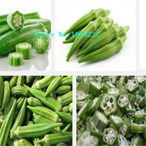 100 pcs Rare graines de gombo légumes vert sain plantes maison jardin délicieux bricolage bonsaï