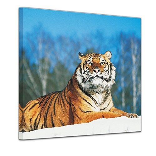 Bilderdepot24 Immagine su telaio a cunei Tigre nella neve - 60 x 60 cm - Già montato sul telaio, Stampa artistica intelaiata e pronta da appendere