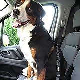 Hunde-Anschnall-Gurt inkl. extra gesichertem Profi-System-Karabiner | Hochwertiger Chrom-Schließhaken | Sicherheits-Gurt mit integrierter Ruck-Dämpfung | Perfekter Autogurt-Adapter | Pets'nDogs - 9