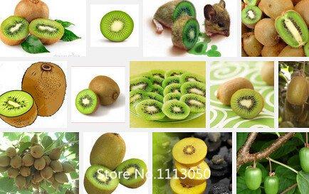 semi-promozione-kiwi-piante-in-vaso-mini-albero-nutrizione-e-ricca-bellissimi-alberi-da-frutto-bonsa