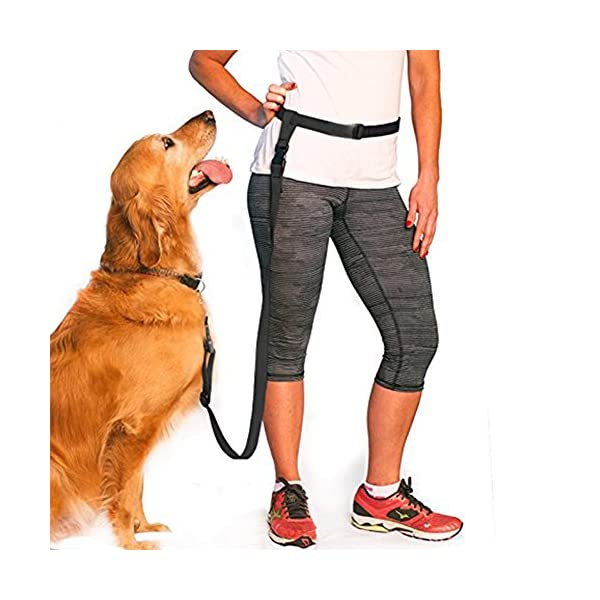 Dog Leash For Running Jogging Dog Walking Training Lead Rope Hands-Free (No Collar) 1