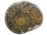 ammonit-fossil Brosche silber 925%