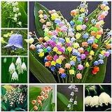 Yukio Samenhhaus - 100 Stück duftend Raritäten Maiglöckchen bunter Blumensamen Multifarben winterhart mehrjährig (100pcs(Nummer SVC031129))