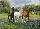 CLEMENTONI Horses Puzzle (1000 Pieces)
