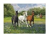 Clementoni 39255.1 - Puzzle Kollektion- Pferde, 1000 Teile