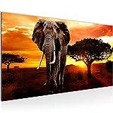 Bilder Afrika Elefant Wandbild Vlies - Leinwand Bild XXL Format Wandbilder Wohnzimmer Wohnung Deko Kunstdrucke Orang Grau 1 Teilig -100% MADE IN GERMANY - Fertig zum Aufhängen 001212a