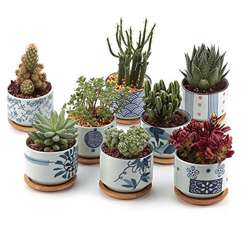 T4U 7.5CM Pots en Céramique du Style Japonais No.5 avec Plateau en Bambou Plante Succulente Cultiver 1 Paquet de 8