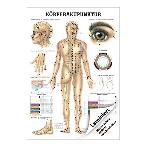 Akupunktur Mini-Poster Anatomie 34x24 cm medizinische Lehrmittel