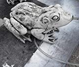 Koi-boerse Steinfigur Wasserspeier Frosch mit Pumpe und Schlauch Kröte