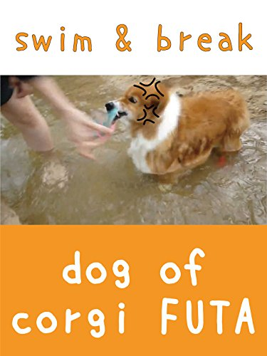 Image of dog of corgi FUTA - swim & break