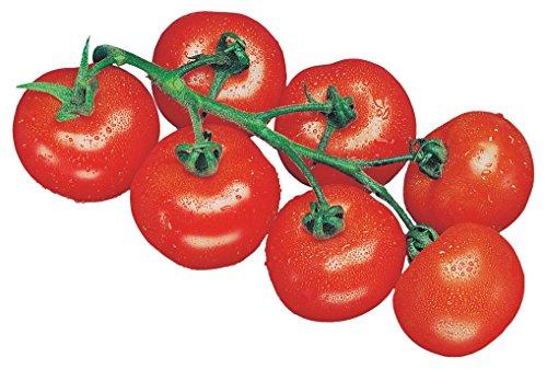 Jardin Express XL81 6 Prestimottes Tomate F1 Octavio, Multicolore, 24.5 x 24 x 4.2 cm