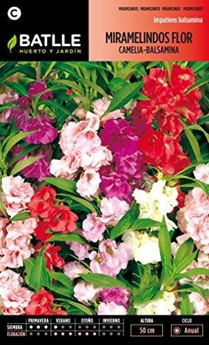 semillas-batlle-095701bols-miramelindos-flor-camelia-balsamina