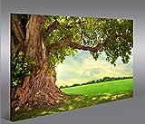 islandburner Bild Bilder auf Leinwand Alter Baum Landschaft Natur Grün 1p XXL Poster Leinwandbild Wandbild Dekoartikel Wohnzimmer Marke