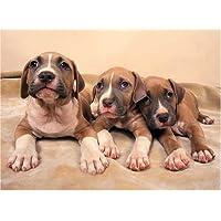 American Pit Bull Terrier Puppies 500 Piece Jigsaw Puzzle by Magnum Publications - Comparador de precios