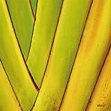 Tischsets abwaschbar Platzsets Tropicana Quadrino von ARTIPICS 4er-Set Platzdeckchen Kunststoff 30x30 cm tropisch exotisches Foto Nahaufnahme Sommer-Motiv Makro gelb-grün