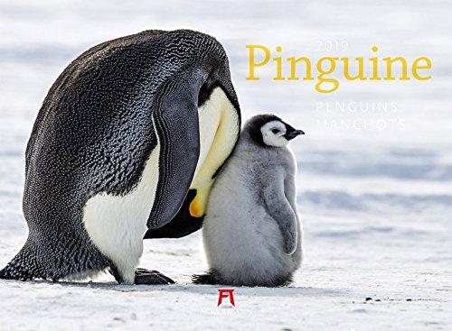 Pinguine 2019, Wandkalender im Querformat (45x33 cm) - Tierkalender mit Monatskalendarium