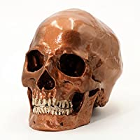 Cranstein A-526 Human Skull, 2 Pieces, Life-size (Color Copper)