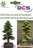 DCS (064) 10 rare tree seeds for home bo...