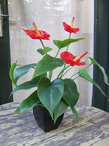 Kunstpflanze Das ganze Jahr ein Hingucker