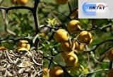 Zhi Qiao (Fructus Aurantii) BITTER ORANGE 100g dry herb weight loss CFS help