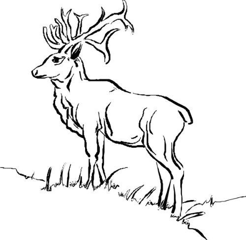 T-Shirt E841 Schönes T-Shirt mit farbigem Brustaufdruck - Logo / Grafik - Comic Design - majestätischer Hirsch mit schönem Geweih auf der Wiese Schwarz