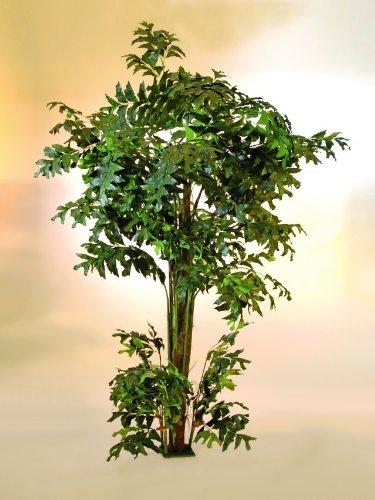 Fishtail-Palmbaum, 305cm