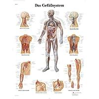 3B Scientific Lehrtafel - Das Gefäßsystem