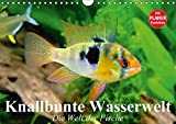 Knallbunte Wasserwelt. Die Welt der Fische (Wandkalender 2017 DIN A4 quer): Die bunte Welt der Fische und Wasserbewohner (Geburtstagskalender, 14 Seiten ) (CALVENDO Tiere)