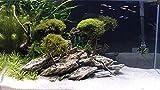 RETNE Holz Stein Aquarium Terrarium Deko Natursteine Dekoration Schiefer 3kg