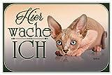 Hier Wache Ich Sphynx Katze blechschild, tin sign, geschenk